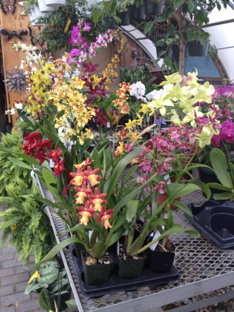 The Four Season Gardening Center